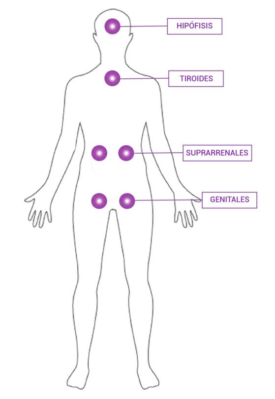 Equilios técnica de equilibrio glandular